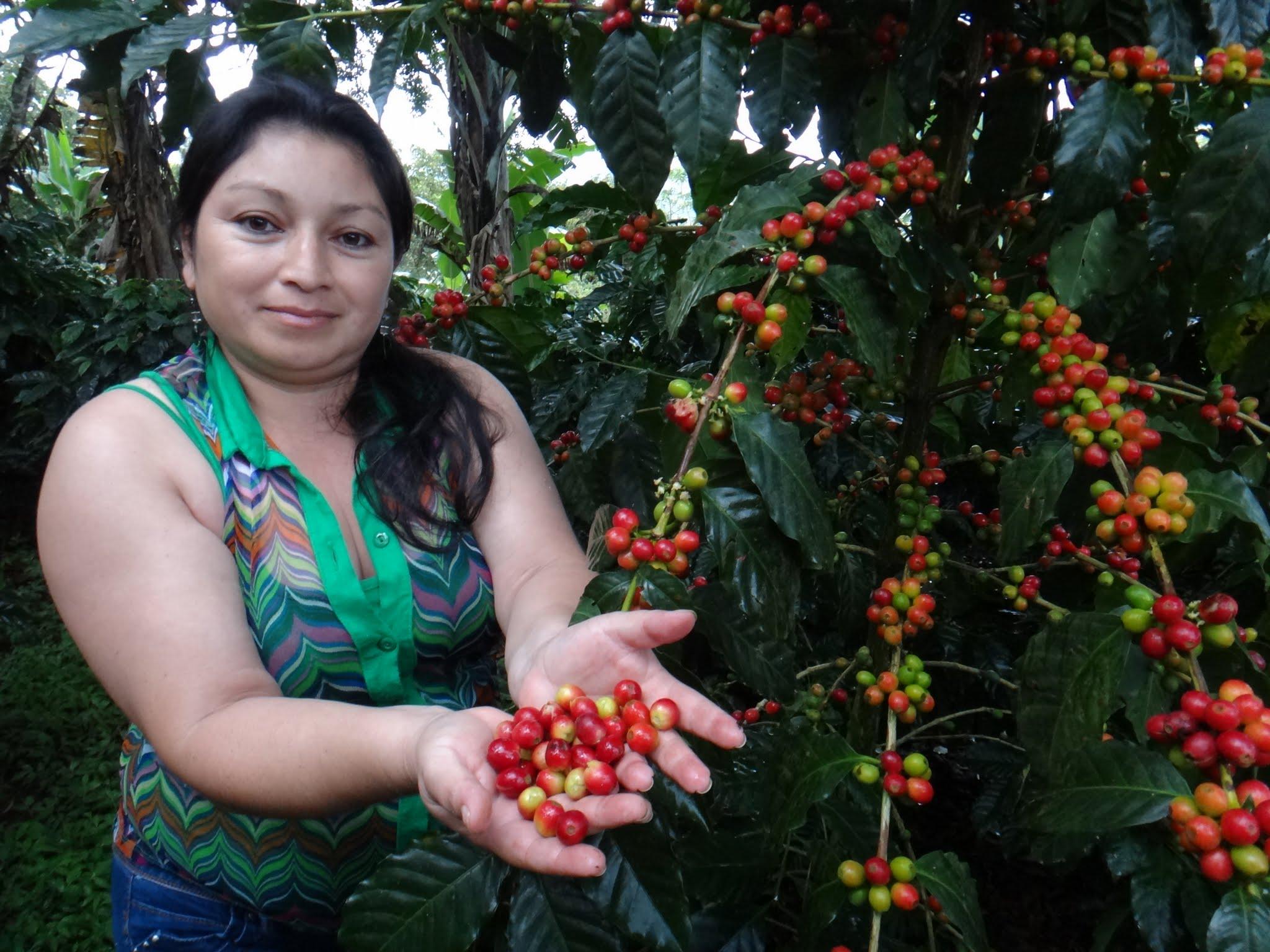 flor-del-pino-honduras-fairtrade-coffee-15