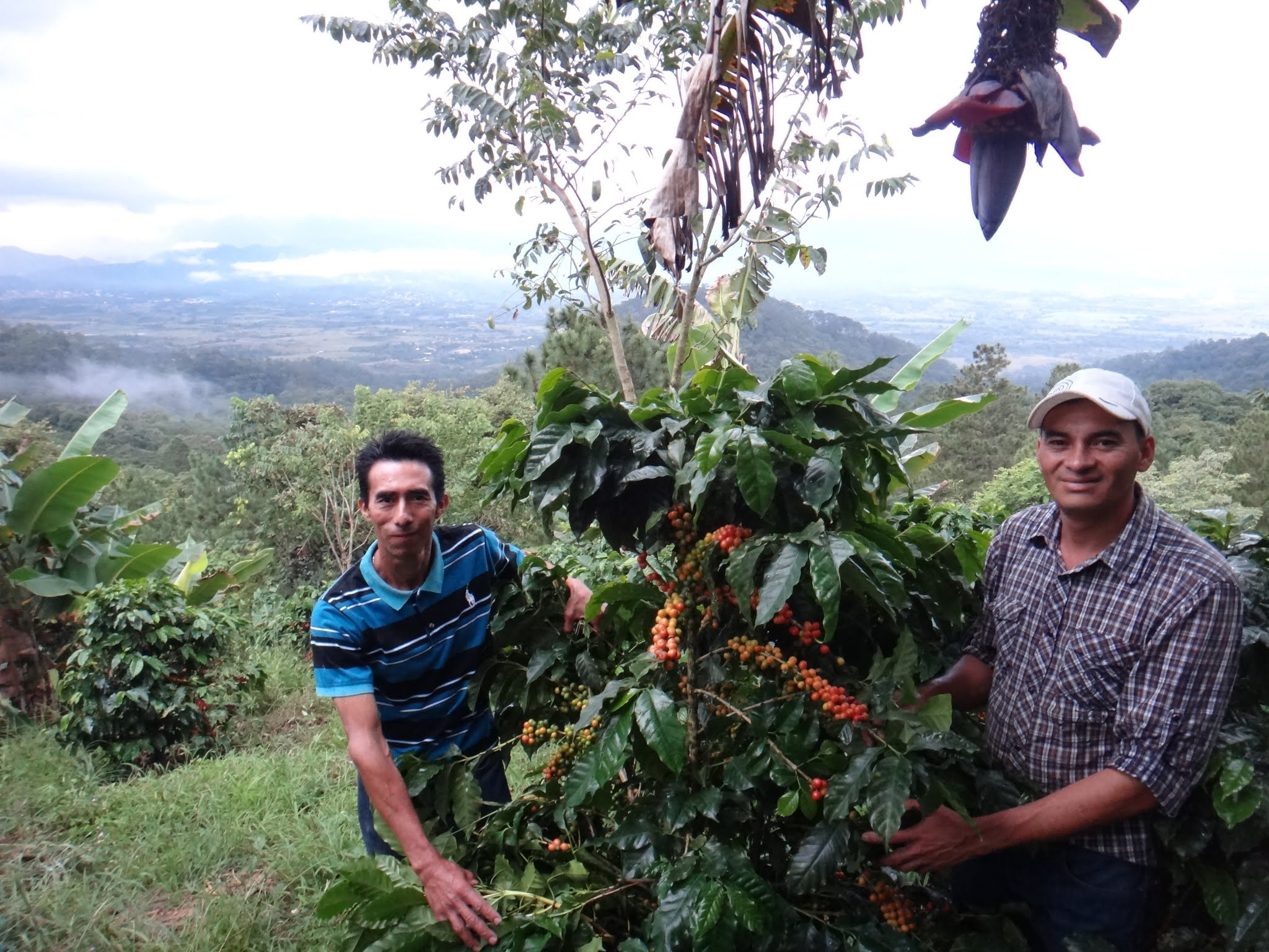 flor-del-pino-honduras-fairtrade-coffee-54