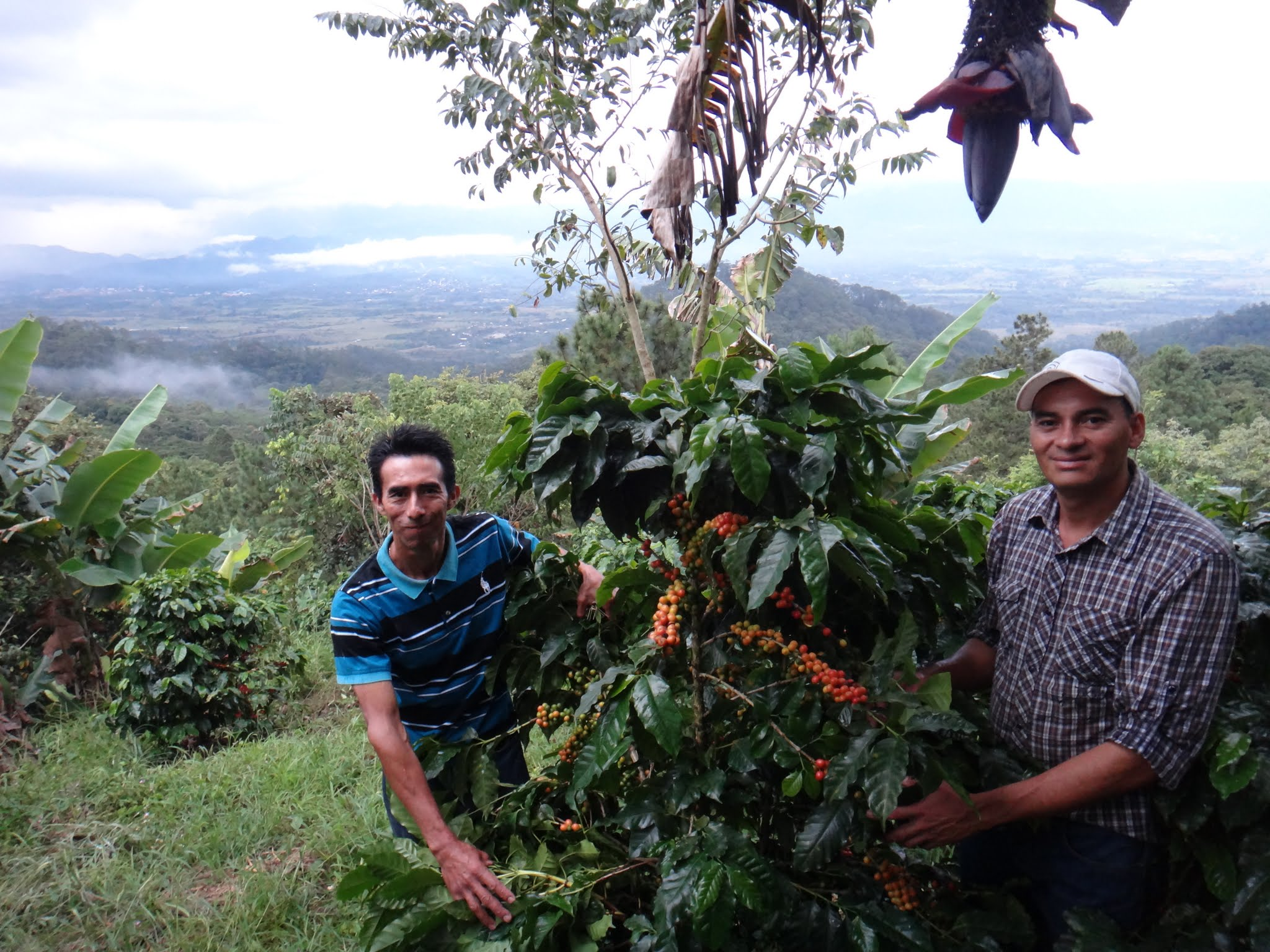 flor-del-pino-honduras-fairtrade-coffee-55