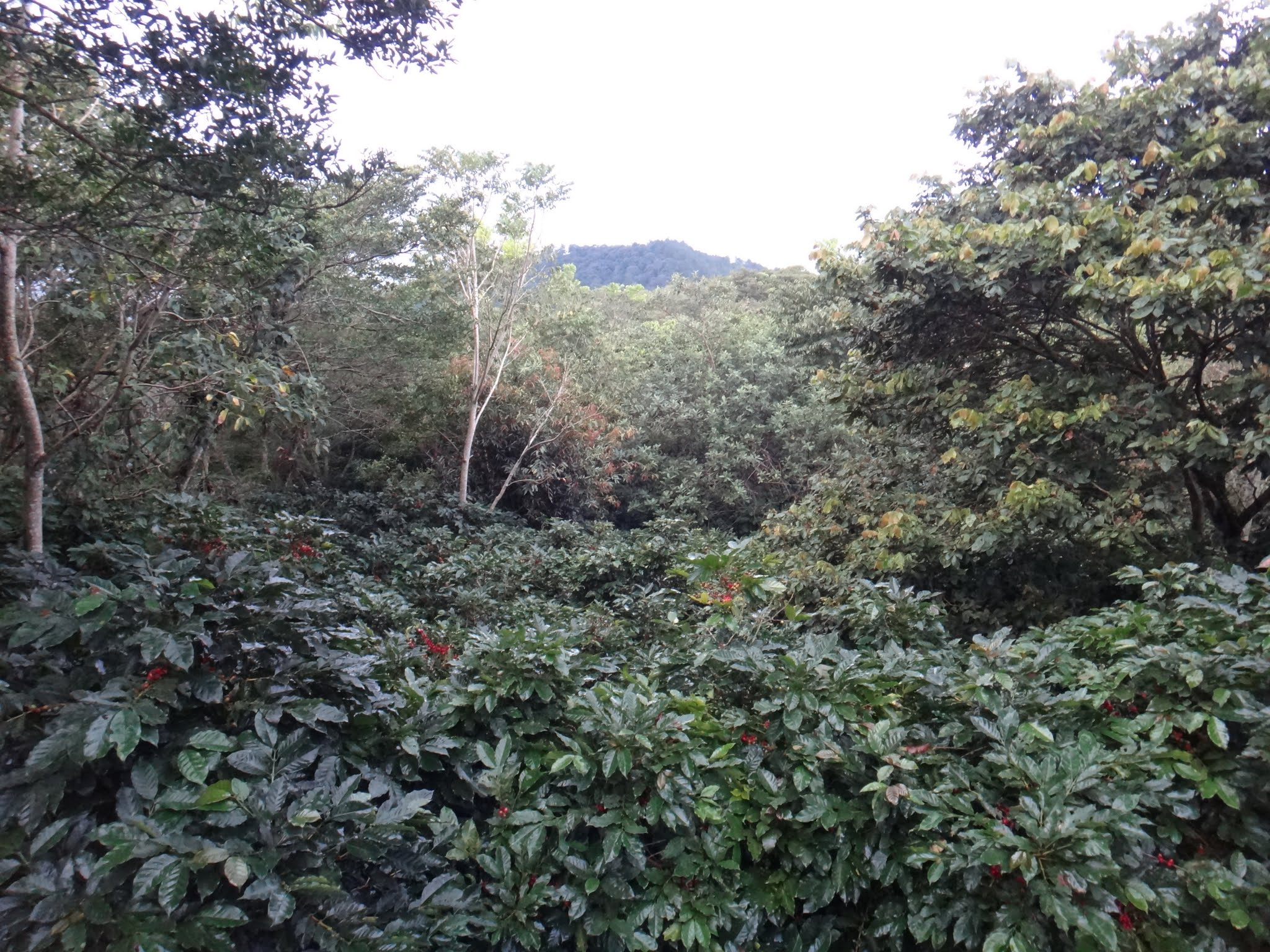 flor-del-pino-honduras-fairtrade-coffee-59