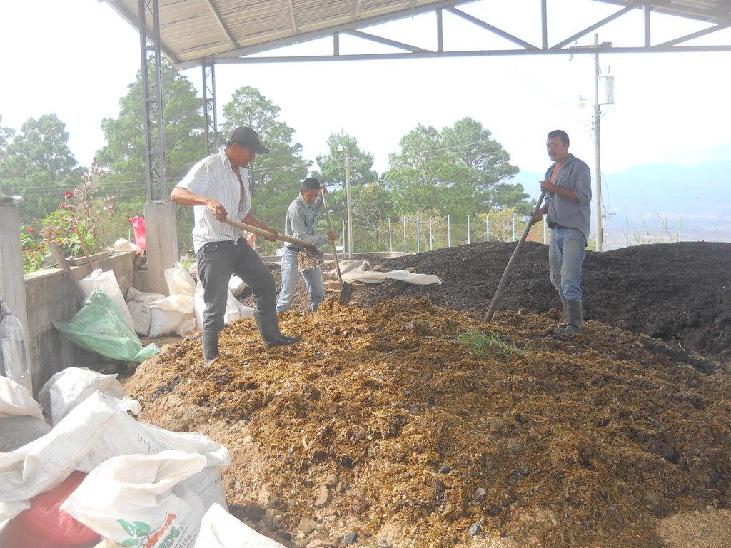 plant-de-abonos-organicos-flor-del-pino-3