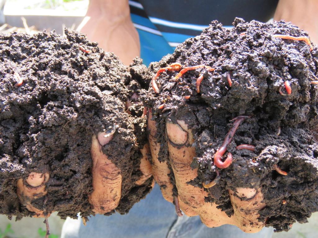 Resultado de imagen para abono organico lombricultura